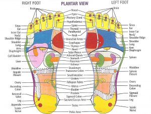 Foot Reflexology Chart Plantar Bottom View Feet Massage Holistic Health Practices Natural Medicine Center Lakeland Central Florida